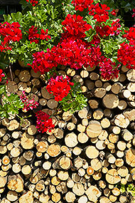 Logs and flowers, Srednja Vas