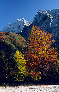 Logarska Dolina in autumn