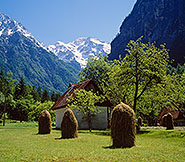 Hay drying in Trenta