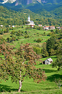 View of Drežnica